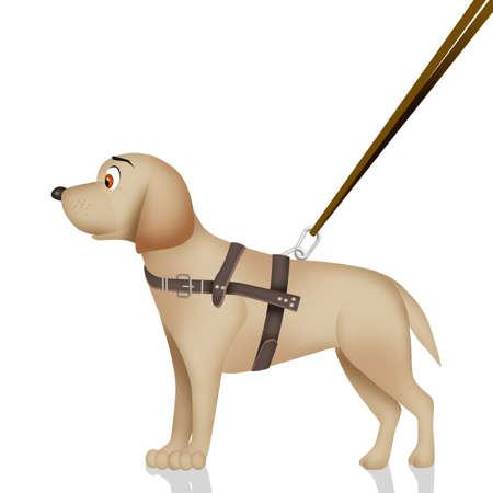 blind dog Foto de archivo