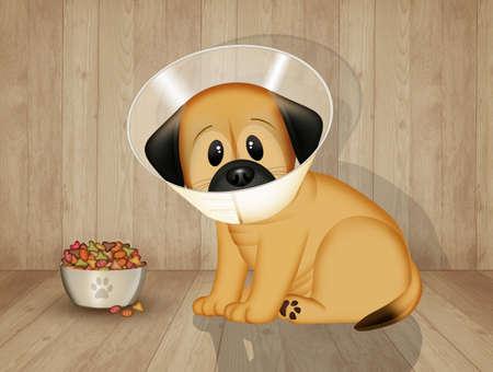 illustration of neutered dog