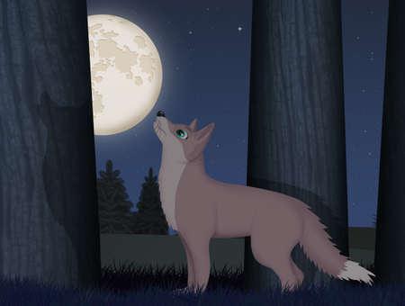 wolf in the forest at night Zdjęcie Seryjne