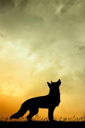 illustration of wolf silhouette at sunset Zdjęcie Seryjne