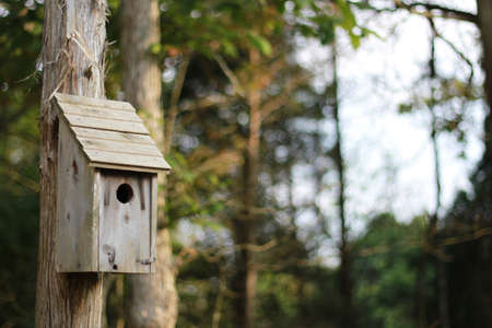 rustic birdhouse on a pole photo