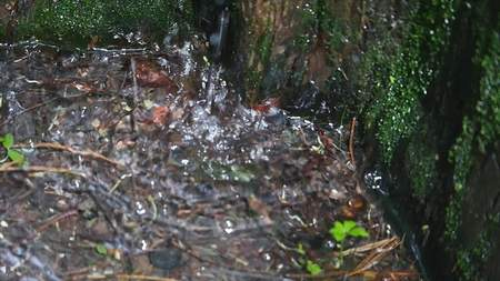 phlegm: Drops of water running down the old tree bark. Stock Photo