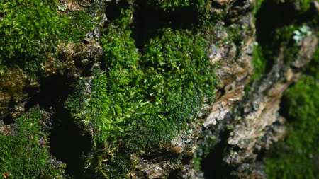 Moss detail on the bark of a tree. selective focus. Stock Photo