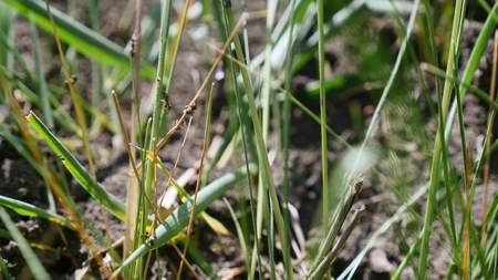 formica: Ants climb on the grass close up.