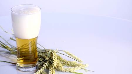 Beer is pouring into glass on white background with A bunch of wheat.