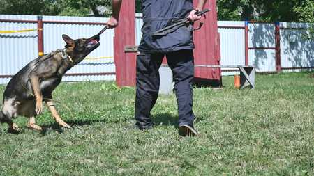 People and animals, man working as dog trainer.