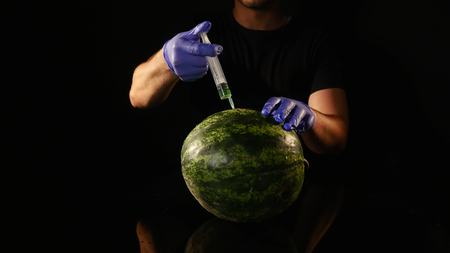 hands of Scientist injecting chemicals into a watermelon.