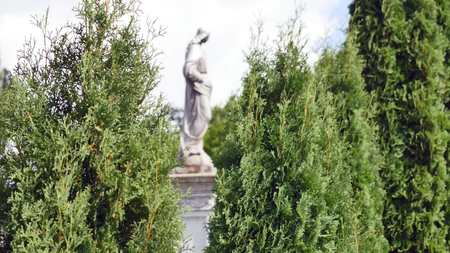 Statue in a cemetery with trees.