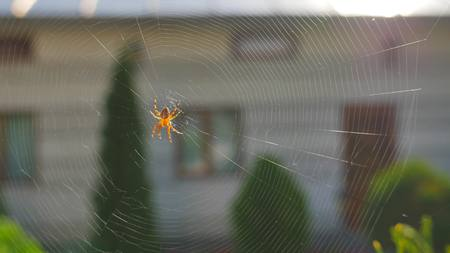spider making a web close up.