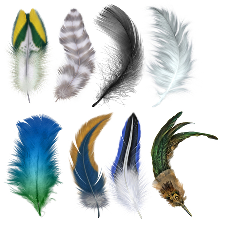 8 in 1, Best HD PNG FEATHER image in one pack Stock Photo