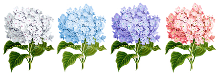 4 in 1, Best HD PNG VINTAGE FLOWER image in one pack