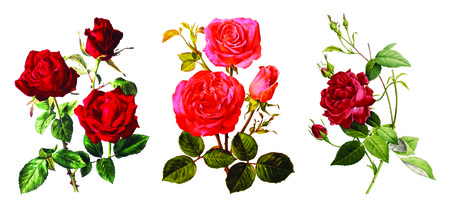 3 in 1, Best HD PNG VINTAGE FLOWER image in one pack Stock Photo