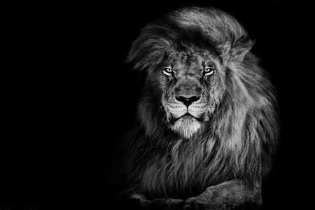 Lion king isolated on black, Portrait Wildlife animal Stock fotó
