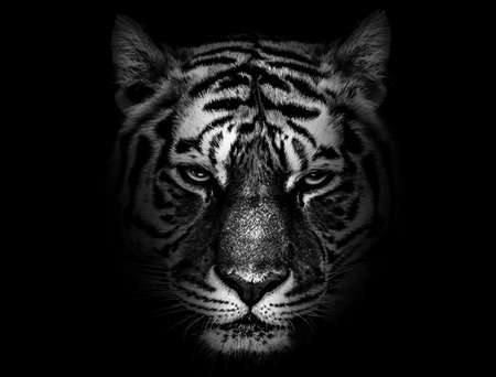 Tiger face profile, animal abstract