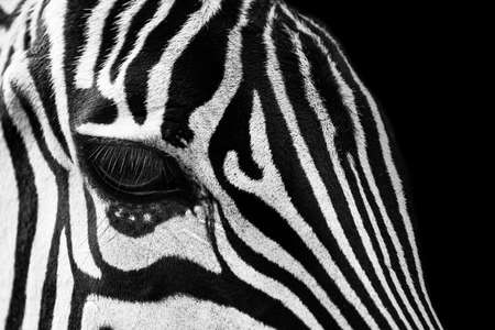 Zebra animal, eyes abstract black white Archivio Fotografico