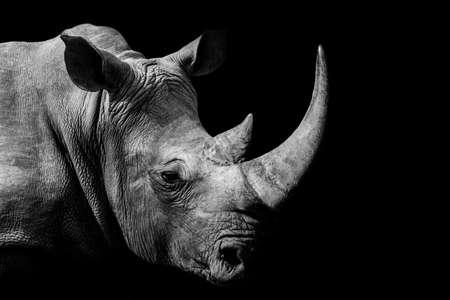 Rhinoceros, animal mammal Rhino, isolated Stock Photo