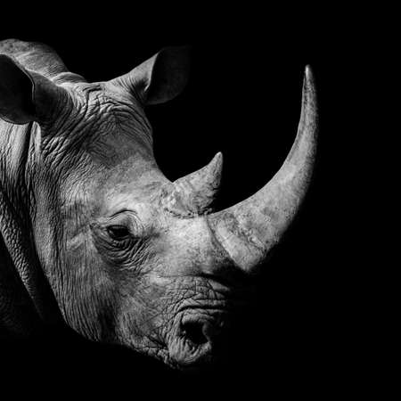Rhinoceros, animal mammal Rhino, isolated