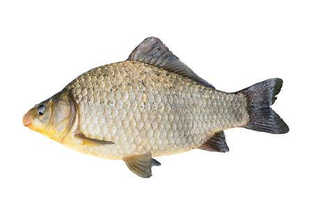 Carp isolated, fish, food
