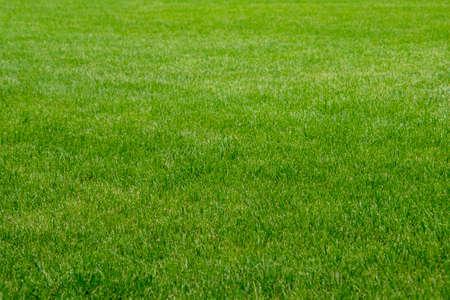 Green grass lawn, green background
