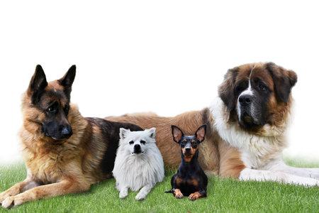 Dogs German Shepherd, saint bernard, Animals