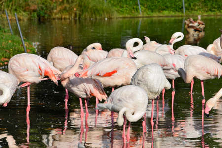 Flamingos pink, tropical animal wildlife, exotic