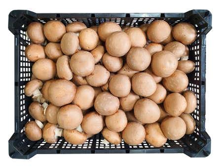 Champignon mushrooms isolated, food