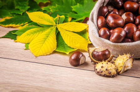 Autumn theme with a horse chestnut leaves. photo