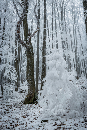frostbitten: frostbitten limbs and trees somewhere in the mountains of Central Europe Stock Photo