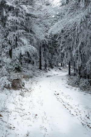 frostbitten limbs and trees somewhere in the mountains of Central Europe Stock Photo
