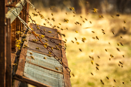 bee swarm: Old wooden bee hive in the countryside. Stock Photo