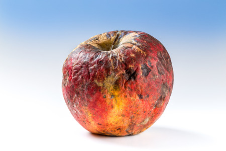 bad apple: Old rotten apple covered with mold, bad storage.