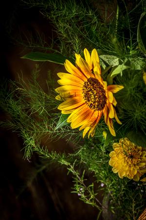 firecracker: flowers yellow and red sunflower, variant firecracker