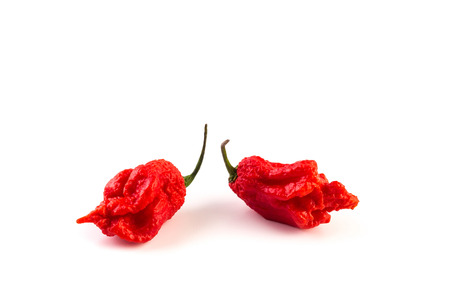 red chilli pepper plant: very strongly hot pepper Carolina Reaper or HP22B Stock Photo