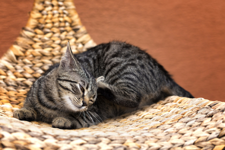 scraping: scraping cat on a wicker chair in garden Stock Photo