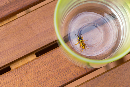 drowned: drowned dangerous wasp in the beverage, at the bottom of a glass jar Stock Photo