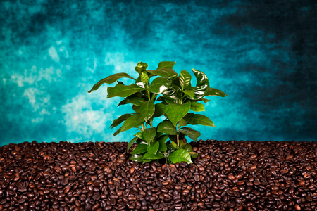 Bunch of coffee beans on the rust background with coffee plant. Low light.