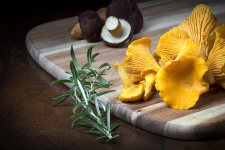 cantharellus: Rosemary with cantharellus. Yellow chanterelle and boletus. Different kinds of mushrooms. Seasonal fungi.