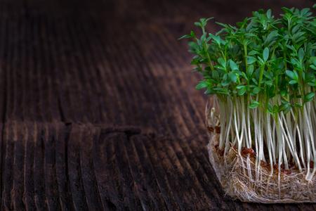 berro: Fresh cress sprouting ready for salad. Healthy vegetarian food.Fresh herbs. Foto de archivo