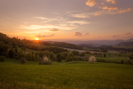 Sunny spring meadow with blossoming cherries. Sunset on the central Slovakia.