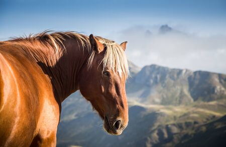 Wild horse looking at camera in the middle of the mountain on a sunny day