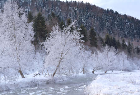 frozen river: Frozen river and tree covered with snow