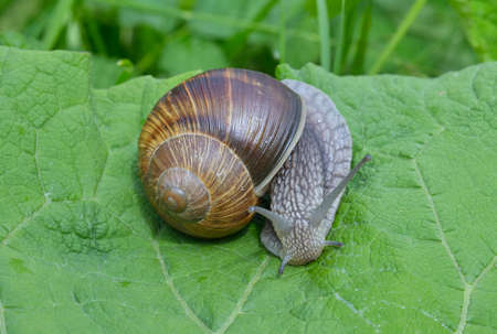 slithery: Snail on a leaf