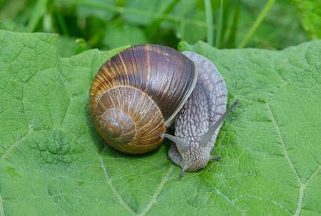 slithery: Snail on a leaf
