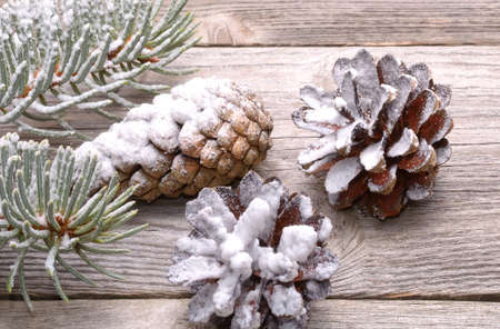 celebratory event: Pine cones and white spruce branch isolated on white background Stock Photo