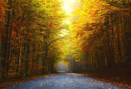 foliage tree: road in autumn forest with colorful foliage tree Stock Photo
