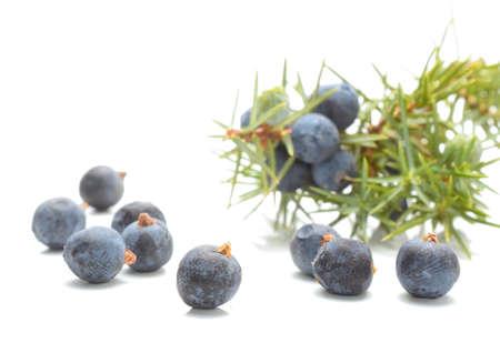 juniper: Juniper berries isolated on white background