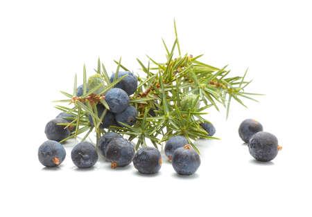 enebro: (Juniperus communis) los frutos comunes Juniper