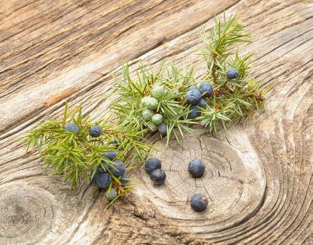 communis: Common Juniper (Juniperus communis) fruits