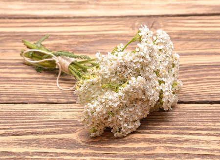 yarrow: yarrow plant with white flowers