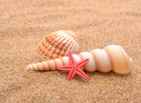 87f59f1740f Brown Starfish Stock Photos And Images - 123RF